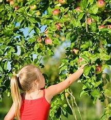12 U-Pick Apple Orchards near Chicago for Fall FUN!