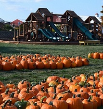 10 High Energy Pumpkin Patches Near Chicago!