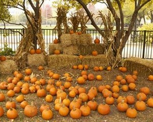 Pumpkin Patches in the City - KidTrail Pick